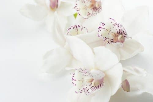 Jaké květiny o mně co říkají? 3