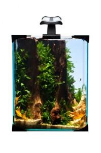 Akvamex3 199x300 Výběr akvária a akvaristických potřeb v 4 krocích