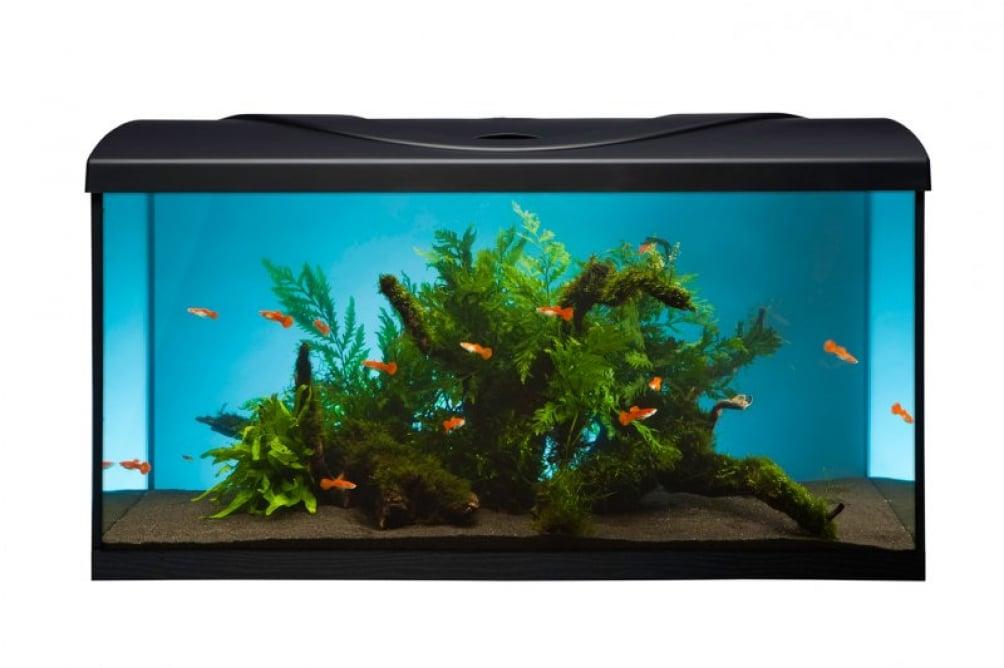 Výběr akvária a akvaristických potřeb v 4 krocích 1