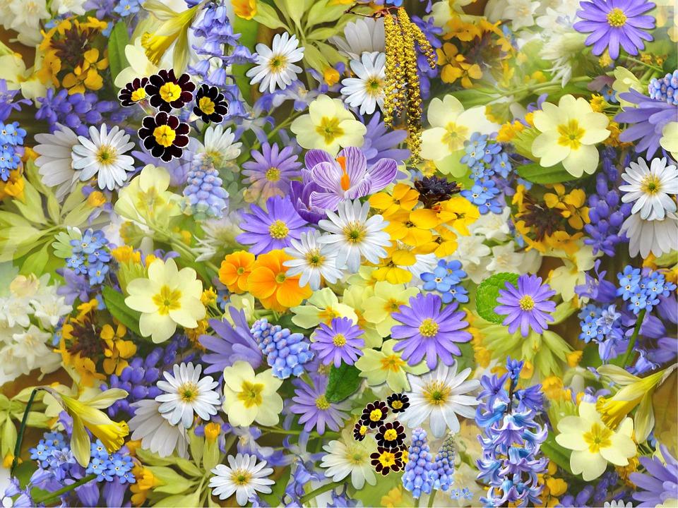 Co o mě říkají květiny? 1