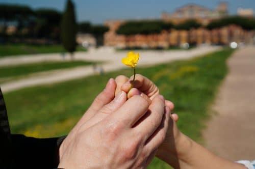 Jaké jsou ty nejkrásnější květiny vhodné na rande? 2
