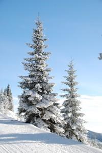 Vánoce se blíží! Už máte vybraný dárek pro své blízké? 3