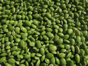zelené fazole 1